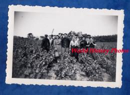 Photo Ancienne - CHENAS ( Moulin à Vent , Rhône ) - Vendanges De Septembre 1952 - Vin Viticulture Wine Cotes Du - Professions
