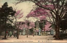 Cherry Blossom Noge Hill - Yokohama - Yokohama