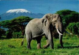 C.A.I.  BELLUNO  1891-1991  MONTE KILIMANGIARO   -AFRICAN WILDLIFE     2 SCAN       (VIAGGIATA) - Tanzania