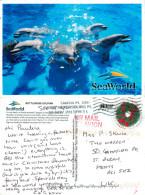 SeaWorld Killer Whales, Orlando, Florida, United States US Postcard Posted 2013 Stamp - Orlando
