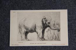 REMBRANDT : Study Of An Elephant. - Peintures & Tableaux