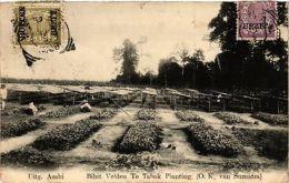 INDONESIA PC DUTCH INDIES - Sumatra - Bibit Veldeu Te Tabak Planting (a1622) - Cartes Postales