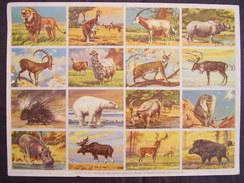 """Planche Scolaire N° 5 """"animaux Sauvages """"editeur ARNAUD Imprimeur DECHAUX 1951 - Lesekarten"""
