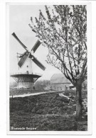 Cpsm: PAYS BAS - BLOEIENDE BETUWE - Moulin à Vent (2) - Pays-Bas