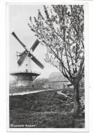 Cpsm: PAYS BAS - BLOEIENDE BETUWE - Moulin à Vent (2) - Nederland