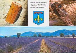 Insecte     H18        3 Vues , Cigales Et Tambourins Et Champ De Lavande - Insectes
