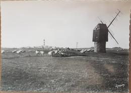 Île D'ouessant.loc Gweltas.pâturage De Moutons.semi Moderne Grand Format - Ouessant