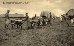 DRESSAGE DE BOEUFS DE TRAVAIL A ABA (UELE) - Congo Belga - Otros