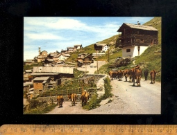 SAINT ST VERAN Vallée Du Queyras Hautes Alpes 05 : Vaches Dans Le Village  Vache Cow Kuh - Autres Communes