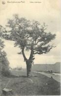 MARCHIENNE-AU-PONT : Chêne Historique - Nels Série 19 N° 67 - Charleroi