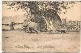 CONGO BELGA ENTERO POSTAL 1916 ELEFANTE ELEPHANT FAUNA MAMIFERO - Elefantes
