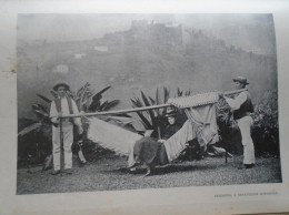 D143011.89 AFK - Espana Islas Canarias  Tenerife  Silla De Manos -  Old Print Ca 1900  Hungarian Travel Book - Estampes & Gravures