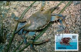 15603 Albania, Maximum  1974  Blue Crab - Albanien