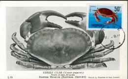 15604 Albania, Maximum  1969  Edible Crab - Albanien