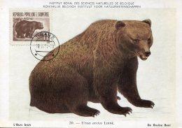 15615 Albania,  Maximum  1962 Ours,   Bear, - Albanien
