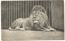Lion D'Abyssinie - Wrote But Not Sent - Leoni