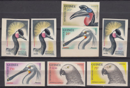 Guinea 1962 Imperforated Birds Stamps From Set, Not Perfect On Back, Look Scan