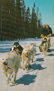 Dog Team And Sled Sleigh - Chien Traîneau - Animated - Probably Manitoba Canada - 2 Scans - Canada