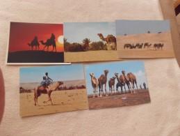 LOT DE 5 CARTES SCENES DU DESERT ...CARAVANES..CHAMEAUX..TUNISIE MAROC - Cartes Postales