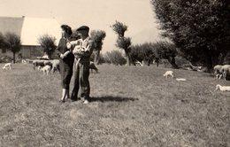 Photo Originale Fermier - Eleveur De Moutons - Agneau - Paysans Au Champ Avec Troupeau & Béret - Métiers