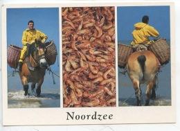 Belgique - Noordzee - Mer Du Nord (pêcheurs De Crevettes à Cheval ) Métiers - éd Van Mieghem - Fishing