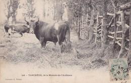 TANCREDE DE LA MANADE DE L'AUDIENCE  (dil291) - Toros