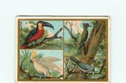CHROMO - EMILE BONZEL - CHICOREE à La BERGERE - HAUBOURDIN -  Oiseau - Pic Vert - Toucan -  Kakatoes - Perroquet - Trade Cards
