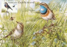 D26909 CARTE MAXIMUM CARD FD 1994 NETHERLANDS - LUCINA SVECICA GORGE BLEUE CP ORIGINAL - Zangvogels