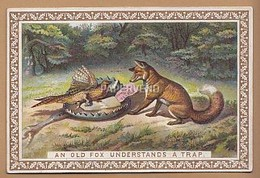 Victorian  Card De La Rue Proverbs An Old Fox Understands A Trap  Egc39 - Old Paper