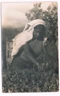 ASIA-1045    CEYLON : Thea Plucker - Sri Lanka (Ceylon)