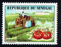 1976  Culture De La Tomate    ** - Senegal (1960-...)