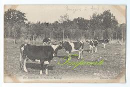 En Sologne - Vaches Au Pâturage - Centre-Val De Loire