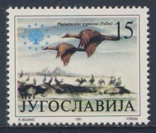 Jugoslavija Yugoslavia 1991 Mi 2504 YT 2368 Sc 2113 ** Phalacrocorax Pygmaeus : Pygmy Cormorant / Zwergscharbe - 1945-1992 Socialist Federal Republic Of Yugoslavia