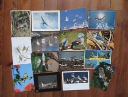 Lot De 15 Cartes D'Oiseaux     Fous De Bassan, Cilibri, Goéland Ect... - Cartes Postales