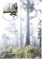 Australia 2005 Maxicard Scott #2415 50c Karri - Trees - Arbres