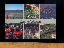 TEXAS USA : Texas Bluebonnets Flowers  1989 - Non Classés