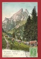 FIX-09  Tanay Sur Vouvry, Paysage Alpestre Avec Troupeau De Vaches. Les Jumelles Et Mont Gardy. Cachet Frontal 1908 - VS Valais