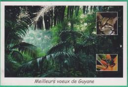 Guyane - Forêt (faune, Animaux) - Editeur: Plume Verte N°VV33 - Autres