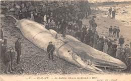 29 - FINISTERE / Roscoff - La Baleine échouée En Décembre 1904 - Belle Animation - Roscoff