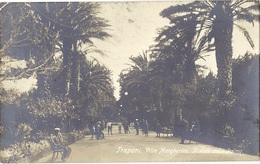 CPA - Trapani - Villa Margherita -il Viale Dalle Palme ( En L'état ) - Trapani