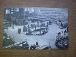 Ste Des AVICULTEURS FRANCAIS ...Vue De L'Exposition Du 29 Janvier 1914 Au Grand Palais(cliché Different) - Mostre
