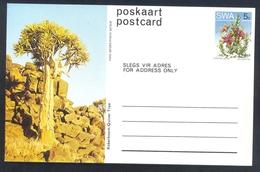 South Africa RSA 1973 Postal Stationery Card: Flora Flowers Blume Cactus Kaktus: Quiver Tree - Cactusses