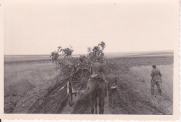 Foto Vormarsch In  Bessarabien - Deutsche Armee - Getreidefelder - Juli 1941 - 9*5,6cm (25797) - Krieg, Militär