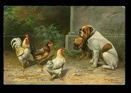 Chien  Hond  Hennen  Hen  Poules  Poule  Coq - Honden