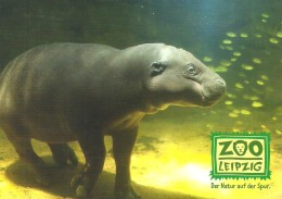 HIPPOTAMUS * HIPPO * LION * LIZARD * ANIMAL * GONDWANALAND * ZOO LEIPZIG * ZL Pfundiger Planscher * Germany - Flusspferde