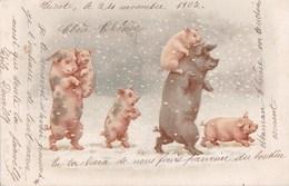 Belle CPA   HIVER 1902  Noel  Bonne Année   Famille COCHONS Dans La NEIGE Sous Les Flocons  Porte Bonheur - Cochons