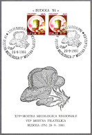 14 Exposicion Micologica - SETAS - MSHROOMS. Budoia, Pordenone, 1981 - Champignons