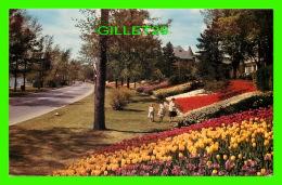 OTTAWA, ONTARIO -  MILLIONS OF FLOWERS - ANIMATED - ALONG THE DRIVEWAY AT DOW'S LAKE - - Ottawa