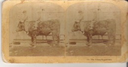 213. The Young Equestrians - Stereoscope Cards