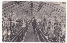 Auderghem: Serre De Dendrobium Phaloenopsis. - Auderghem - Oudergem